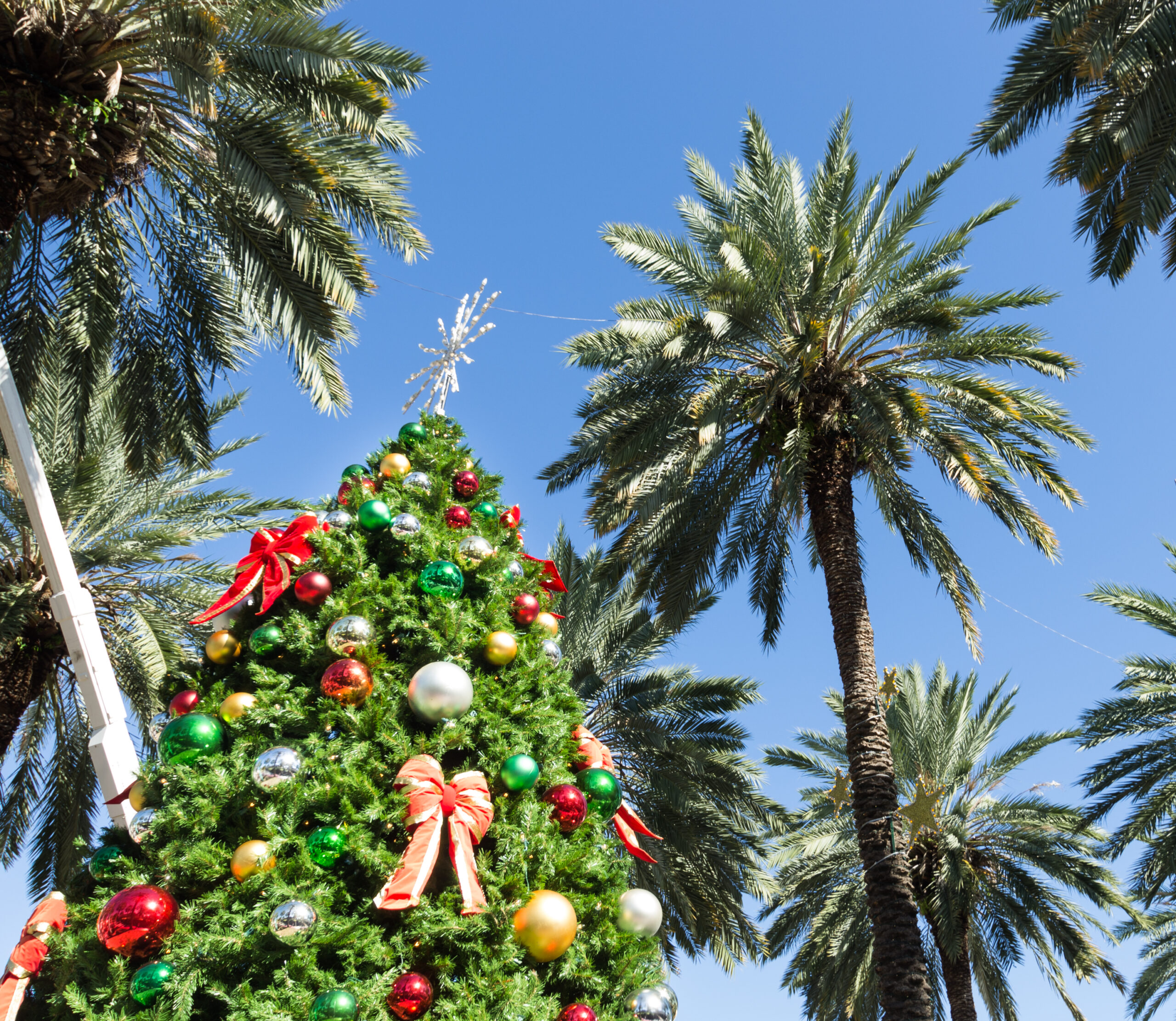 Winter is Coming! 5 Fun Winter Activities in South Florida