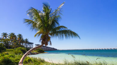 South Florida Attractions to Visit This Summer